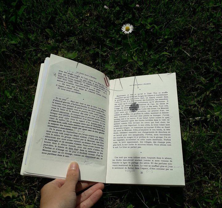"""5 coups de coeur """"Lecture-Nature"""" pour l'été"""