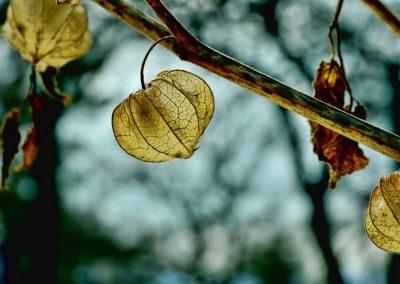 leaf-3197371_1920