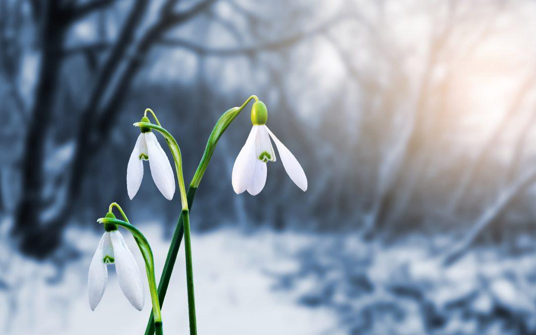 3 fausses croyances qui t'empêchent de te lancer pour accompagner tes clients dans la nature